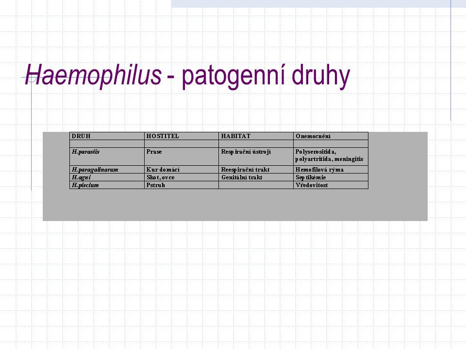 Haemophilus - patogenní druhy