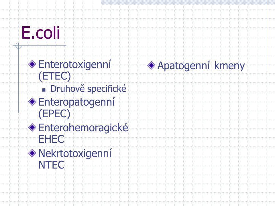 E.coli Enterotoxigenní (ETEC) Druhově specifické Enteropatogenní (EPEC) Enterohemoragické EHEC Nekrtotoxigenní NTEC Apatogenní kmeny
