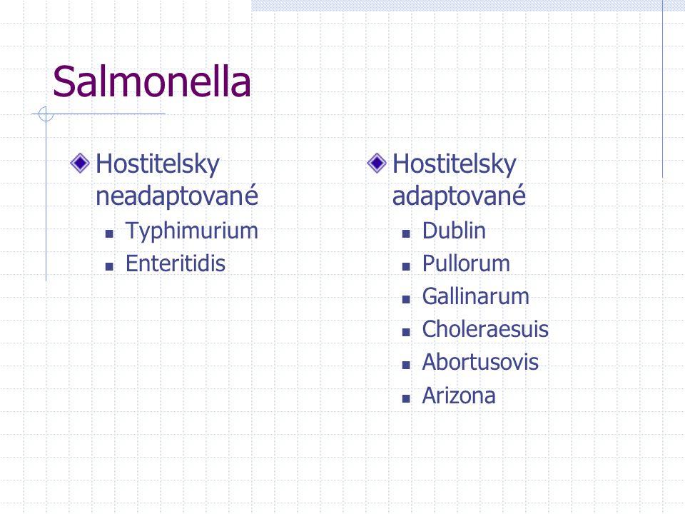 Salmonella Hostitelsky neadaptované Typhimurium Enteritidis Hostitelsky adaptované Dublin Pullorum Gallinarum Choleraesuis Abortusovis Arizona