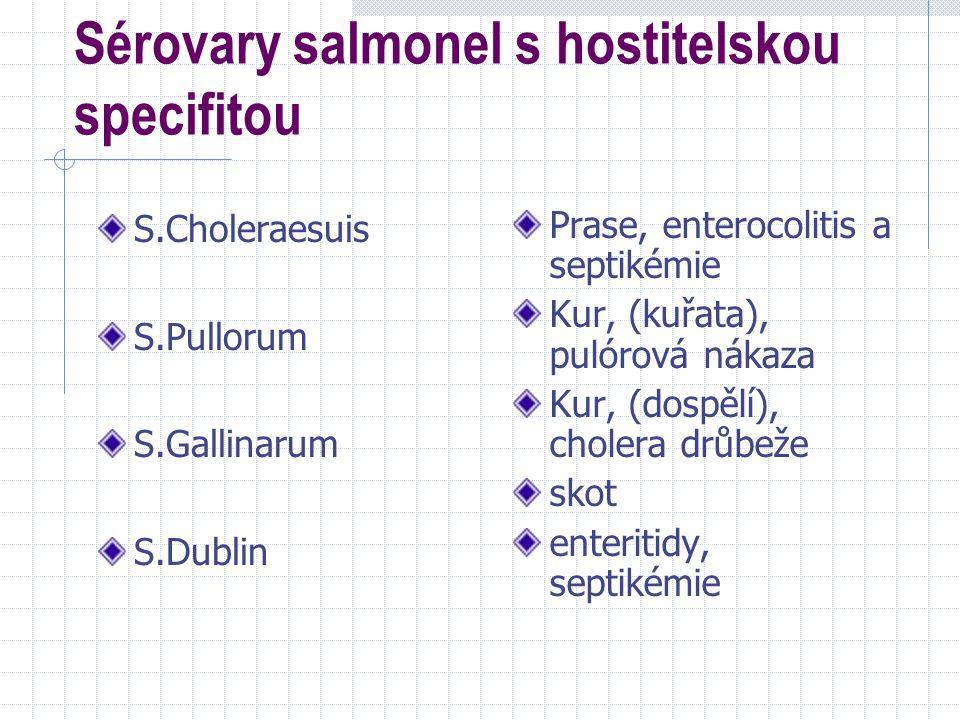 G negativní anaerobní, nesporulující bakterie Rody: Bacteroides Fusobacterium Prevotella Porphyromonas Dichelobacter