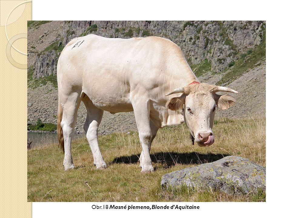 Obr.18 Masné plemeno, Blonde d'Aquitaine