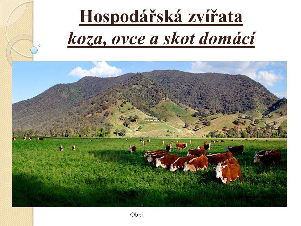 Hospodářská zvířata koza, ovce a skot domácí Obr.1