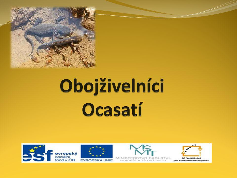 žije v balkánských krasových jeskynních je rozšířený hlavně na Slovinsku žije 70 – 100 let bez potravy vydrží i 10 let