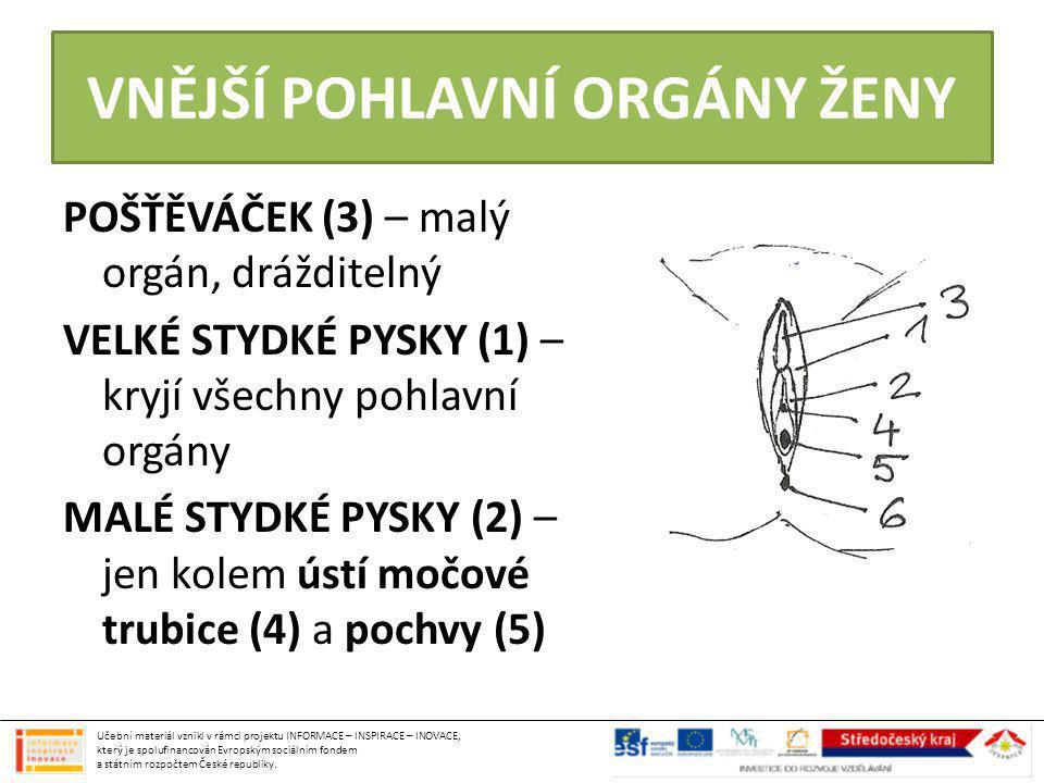 ženská pohlavní žláza párový orgán, ležící po obou stranách dělohy produkují ženské pohlavní hormony (estrogeny) produkují vajíčka – při narození vytvořeno 700 tis.