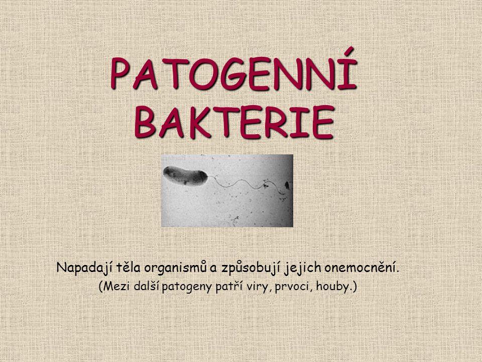 PATOGENNÍ BAKTERIE Napadají těla organismů a způsobují jejich onemocnění. (Mezi další patogeny patří viry, prvoci, houby.)