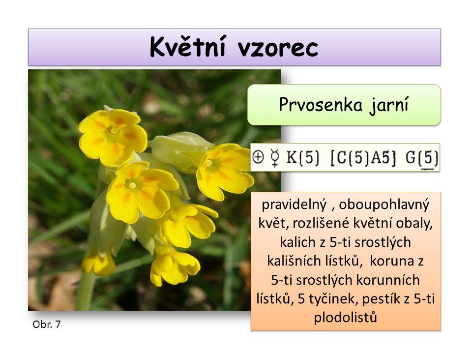 Květní vzorec Prvosenka jarní pravidelný, oboupohlavný květ, rozlišené květní obaly, kalich z 5-ti srostlých kališních lístků, koruna z 5-ti srostlých