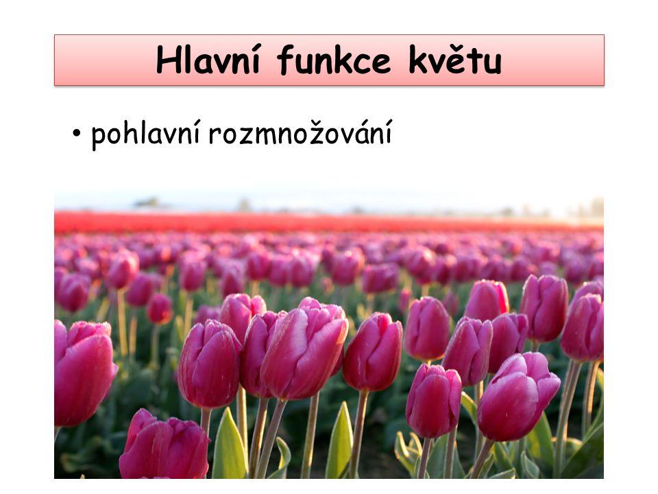 Hlavní funkce květu pohlavní rozmnožování