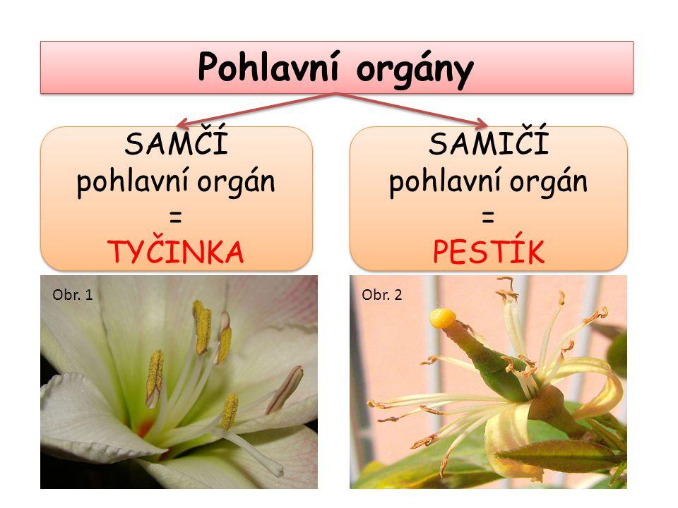 Pohlavní orgány SAMIČÍ pohlavní orgán = PESTÍK SAMIČÍ pohlavní orgán = PESTÍK SAMČÍ pohlavní orgán = TYČINKA SAMČÍ pohlavní orgán = TYČINKA Obr. 1Obr.