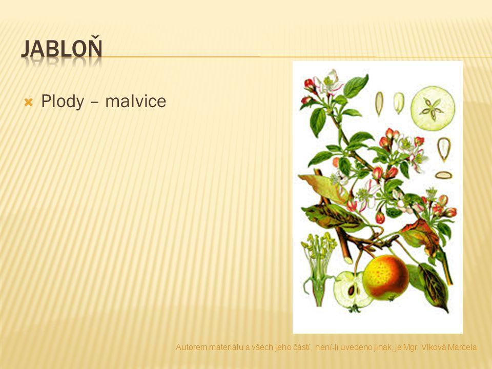  Plody – malvice Autorem materiálu a všech jeho částí, není-li uvedeno jinak, je Mgr.