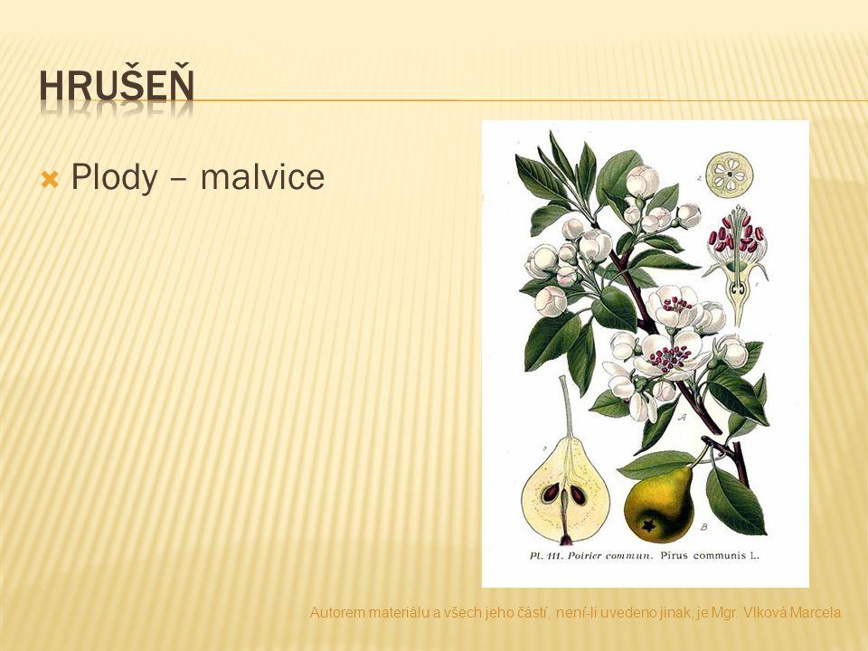  Plody – malvice Autorem materiálu a všech jeho částí, není-li uvedeno jinak, je Mgr. Vlková Marcela