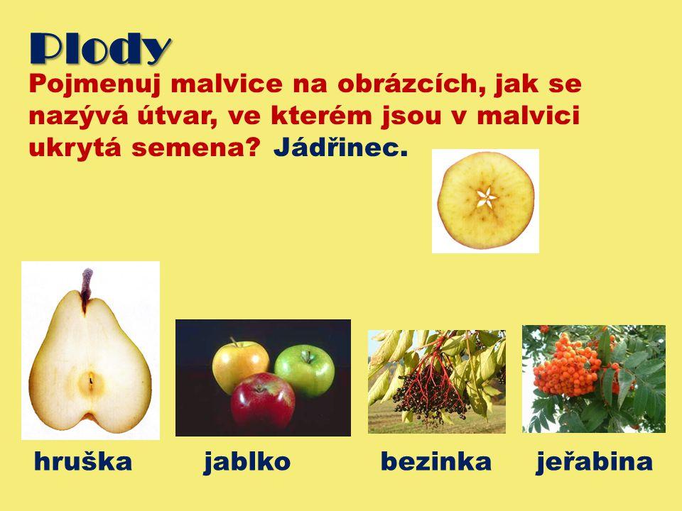 Plody Pojmenuj malvice na obrázcích, jak se nazývá útvar, ve kterém jsou v malvici ukrytá semena? Jádřinec. hruška jablko bezinka jeřabina
