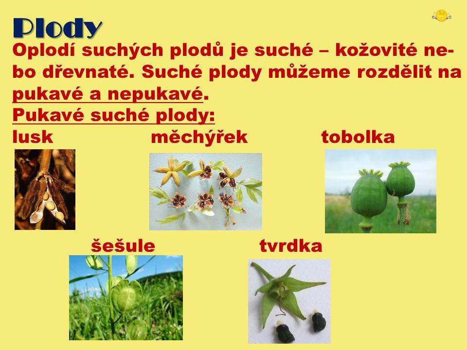 Plody Oplodí suchých plodů je suché – kožovité ne- bo dřevnaté. Suché plody můžeme rozdělit na pukavé a nepukavé. Pukavé suché plody: lusk měchýřek to