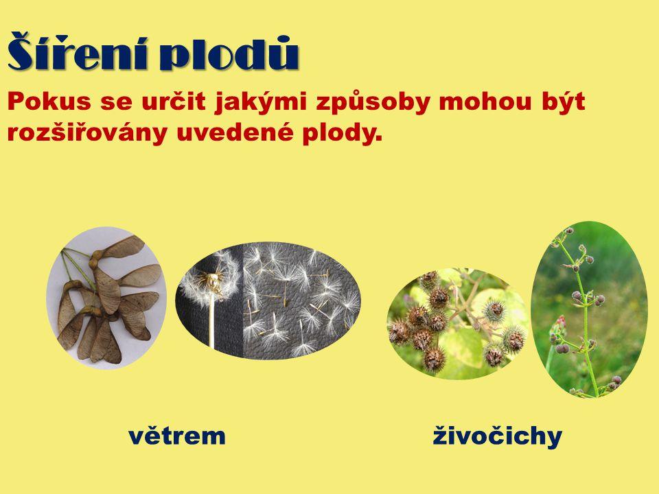 Šírení plodu Pokus se určit jakými způsoby mohou být rozšiřovány uvedené plody. větrem živočichy
