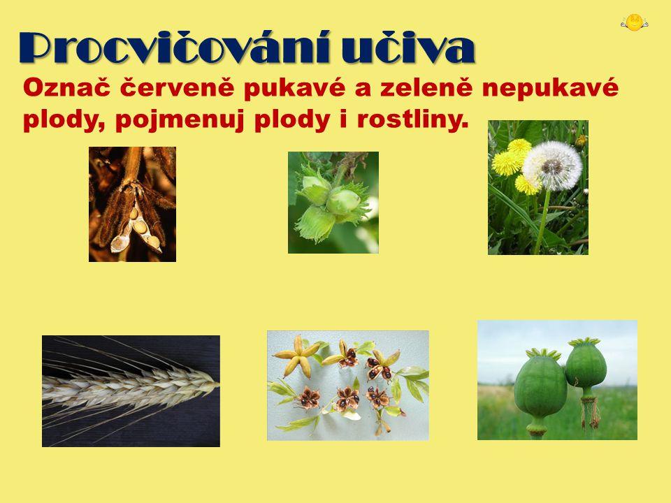 Procvicování uciva Označ červeně pukavé a zeleně nepukavé plody, pojmenuj plody i rostliny.