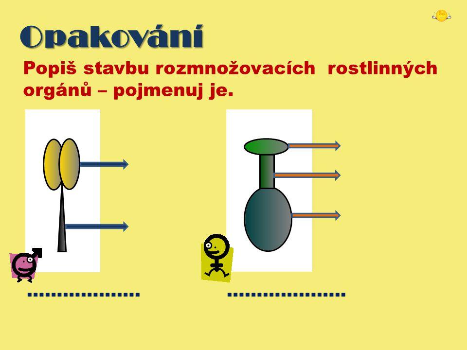 Opakování Popiš stavbu rozmnožovacích rostlinných orgánů – pojmenuj je. ………………. ………………..