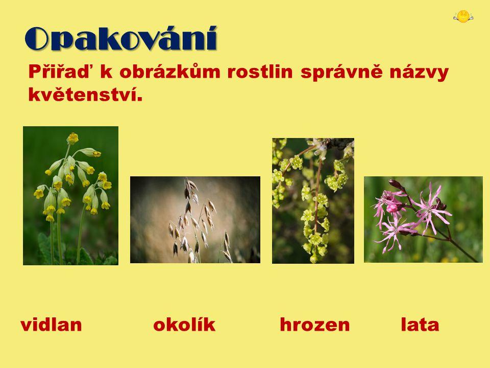 Opakování Přiřaď k obrázkům rostlin správně názvy květenství. vidlan okolík hrozen lata