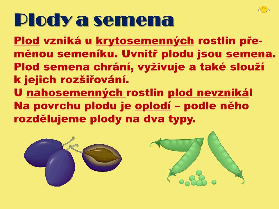 Plody a semena Plod vzniká u krytosemenných rostlin pře- měnou semeníku. Uvnitř plodu jsou semena. Plod semena chrání, vyživuje a také slouží k jejich