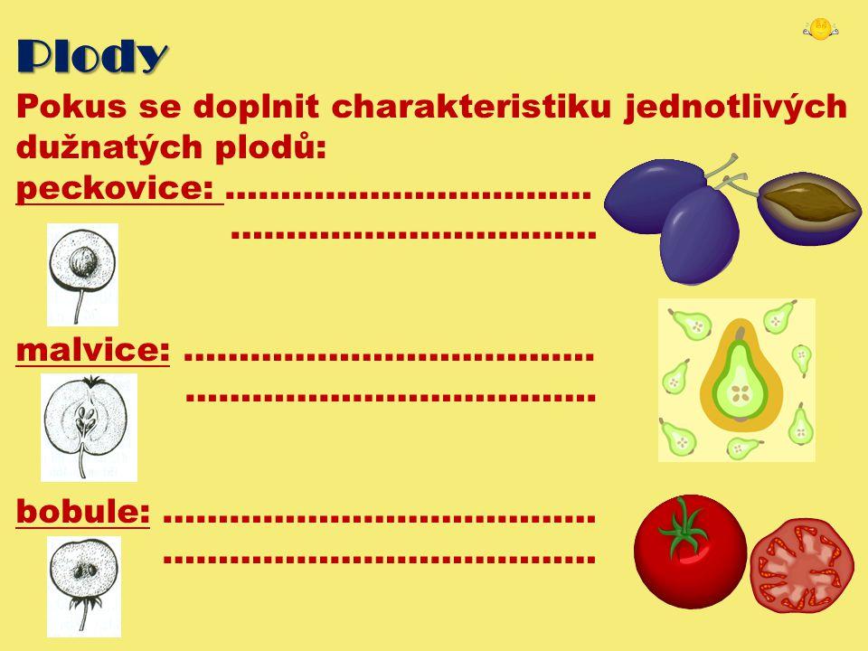 Plody Pokus se doplnit charakteristiku jednotlivých dužnatých plodů: peckovice: …………………………… …………………………… malvice: ………………………………. ………………………………. bobule: …