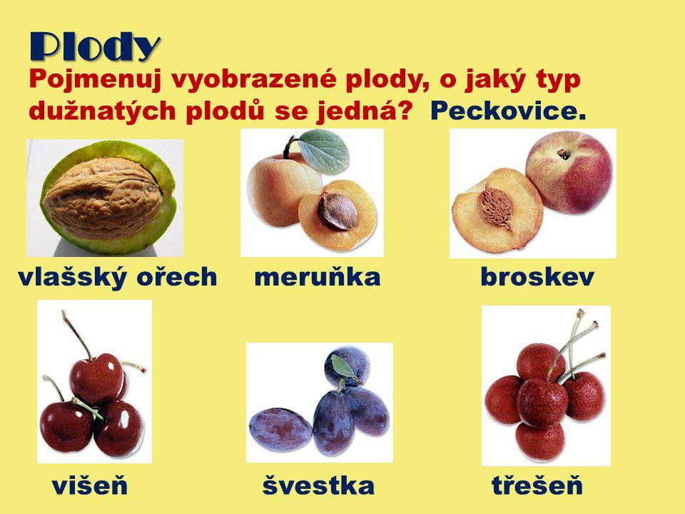 Plody Pojmenuj vyobrazené plody, o jaký typ dužnatých plodů se jedná.