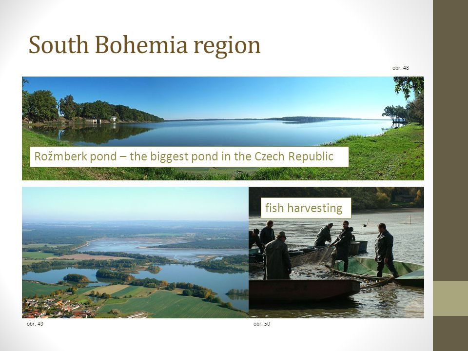South Bohemia region obr. 49obr. 50 obr. 48 fish harvesting Rožmberk pond – the biggest pond in the Czech Republic