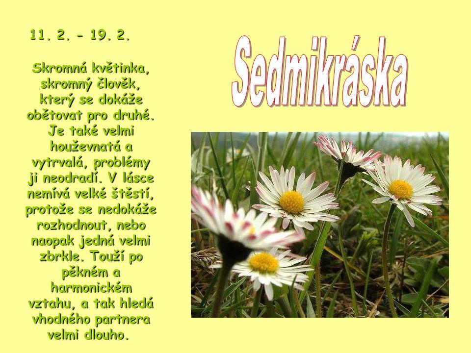 Skromná květinka, skromný člověk, který se dokáže obětovat pro druhé.
