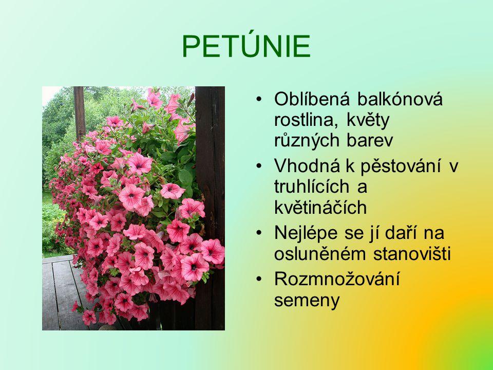 PETÚNIE Oblíbená balkónová rostlina, květy různých barev Vhodná k pěstování v truhlících a květináčích Nejlépe se jí daří na osluněném stanovišti Rozmnožování semeny