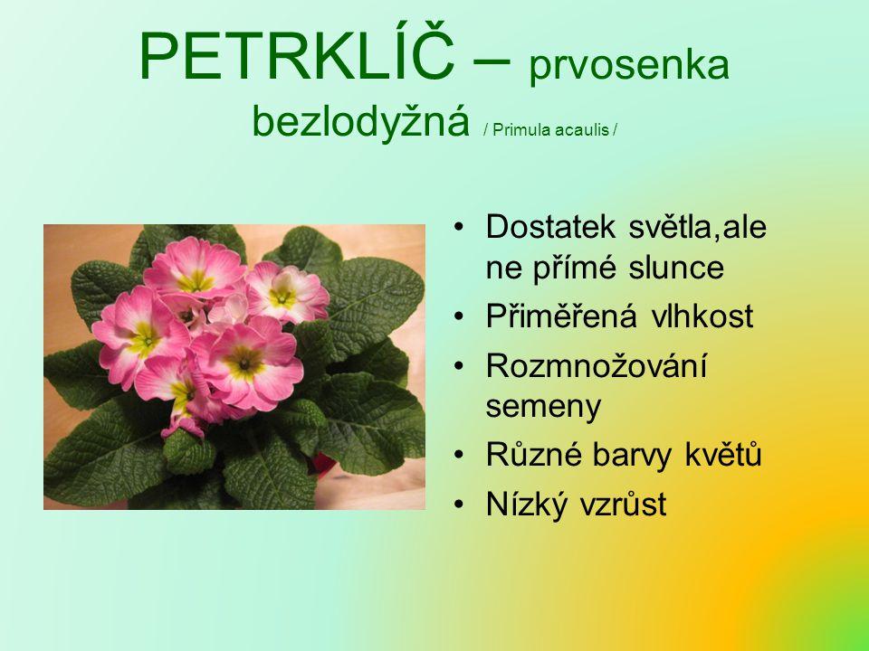 PETRKLÍČ – prvosenka bezlodyžná / Primula acaulis / Dostatek světla,ale ne přímé slunce Přiměřená vlhkost Rozmnožování semeny Různé barvy květů Nízký vzrůst