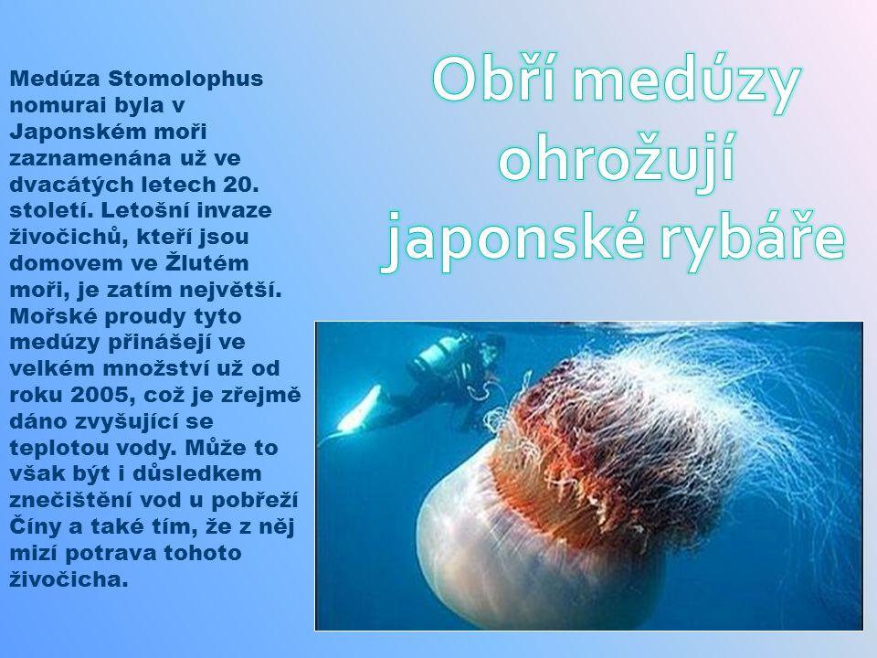 Medúza Stomolophus nomurai byla v Japonském moři zaznamenána už ve dvacátých letech 20. století. Letošní invaze živočichů, kteří jsou domovem ve Žluté