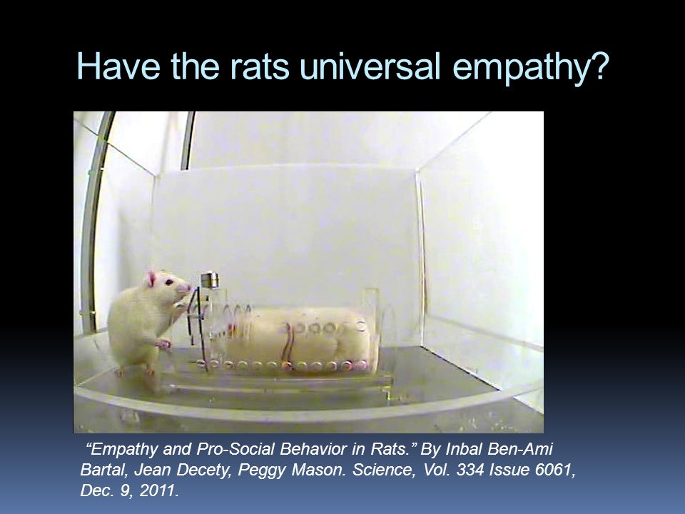 Have the rats universal empathy.