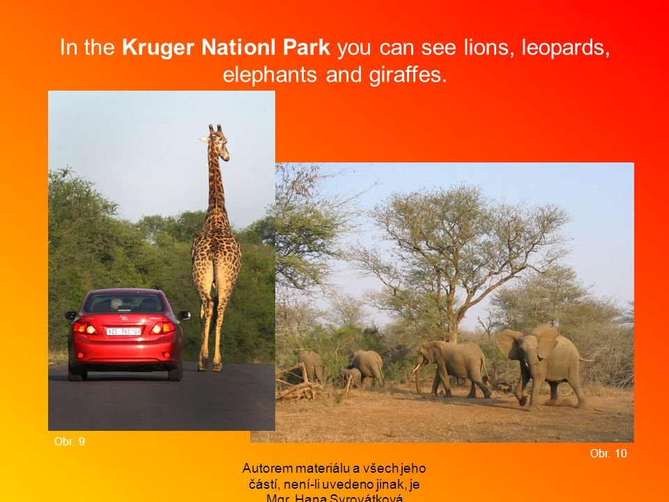 In the Kruger Nationl Park you can see lions, leopards, elephants and giraffes.