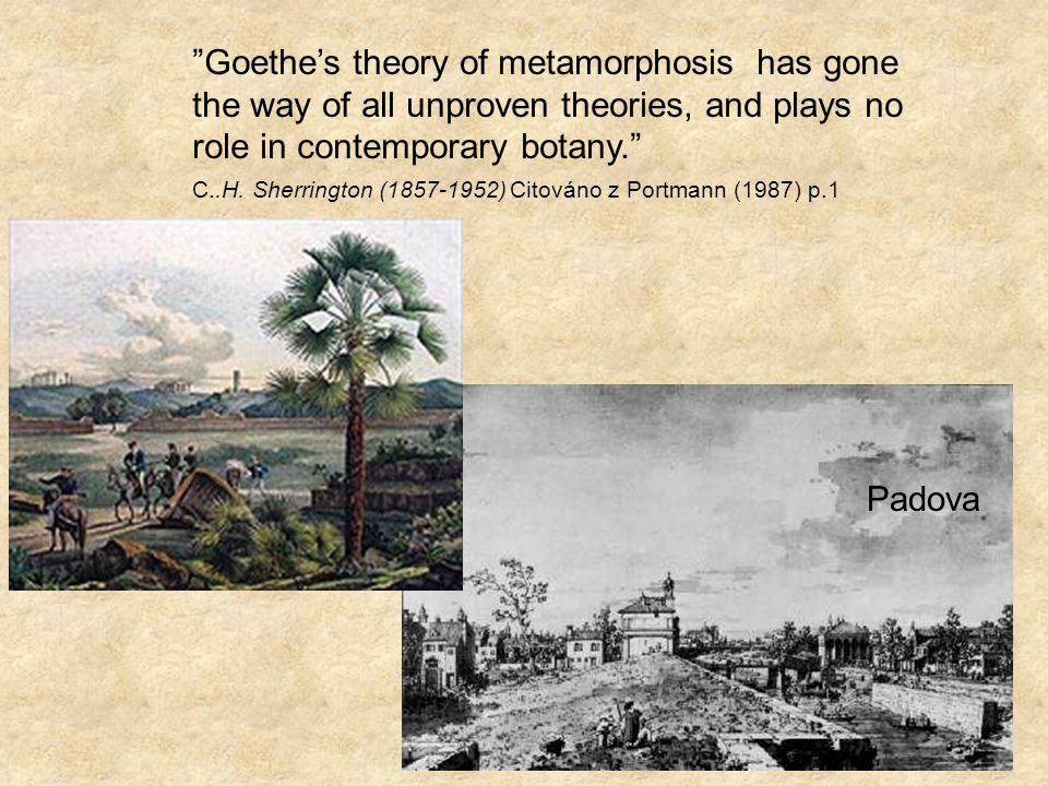 Padova Goethes theory of metamorphosis has gone the way of all unproven theories, and plays no role in contemporary botany.