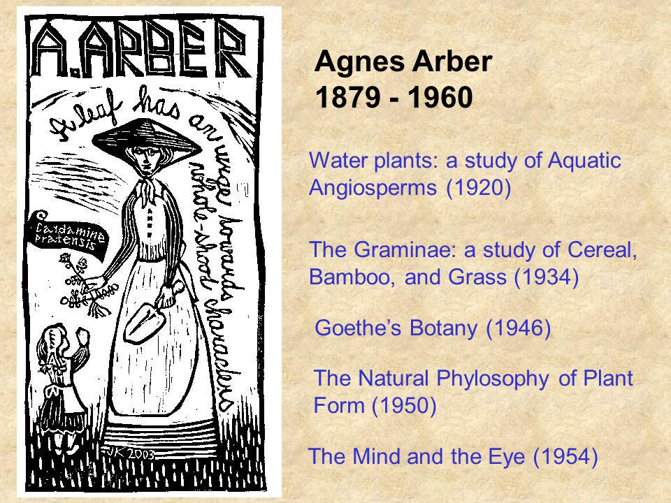 Agnes Arber Water plants: a study of Aquatic Angiosperms (1920) The Graminae: a study of Cereal, Bamboo, and Grass (1934) Goethes Botany (1946) The Natural Phylosophy of Plant Form (1950) The Mind and the Eye (1954)