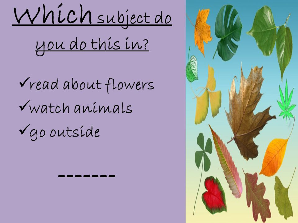 Which subject do you do this in  read about flowers  watch animals  go outside -------