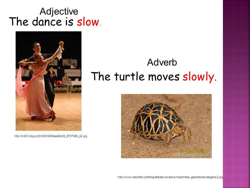 The dance is slow. http://nd01.blog.cz/318/515/56dae8dc39_5707066_o2.jpg The turtle moves slowly.