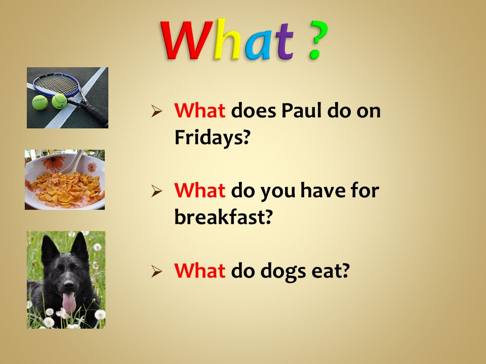  What does Paul do on Fridays  What do you have for breakfast  What do dogs eat